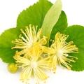 Lime (Linden) Blossom